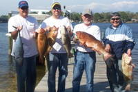 Red_Groupers_03-31-081.JPG