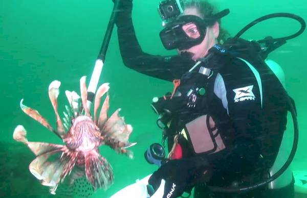 Candy with speared Lionfish Photo by Gregg Velez