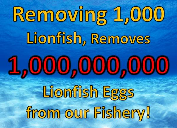 Lionfish Removal Info Poster